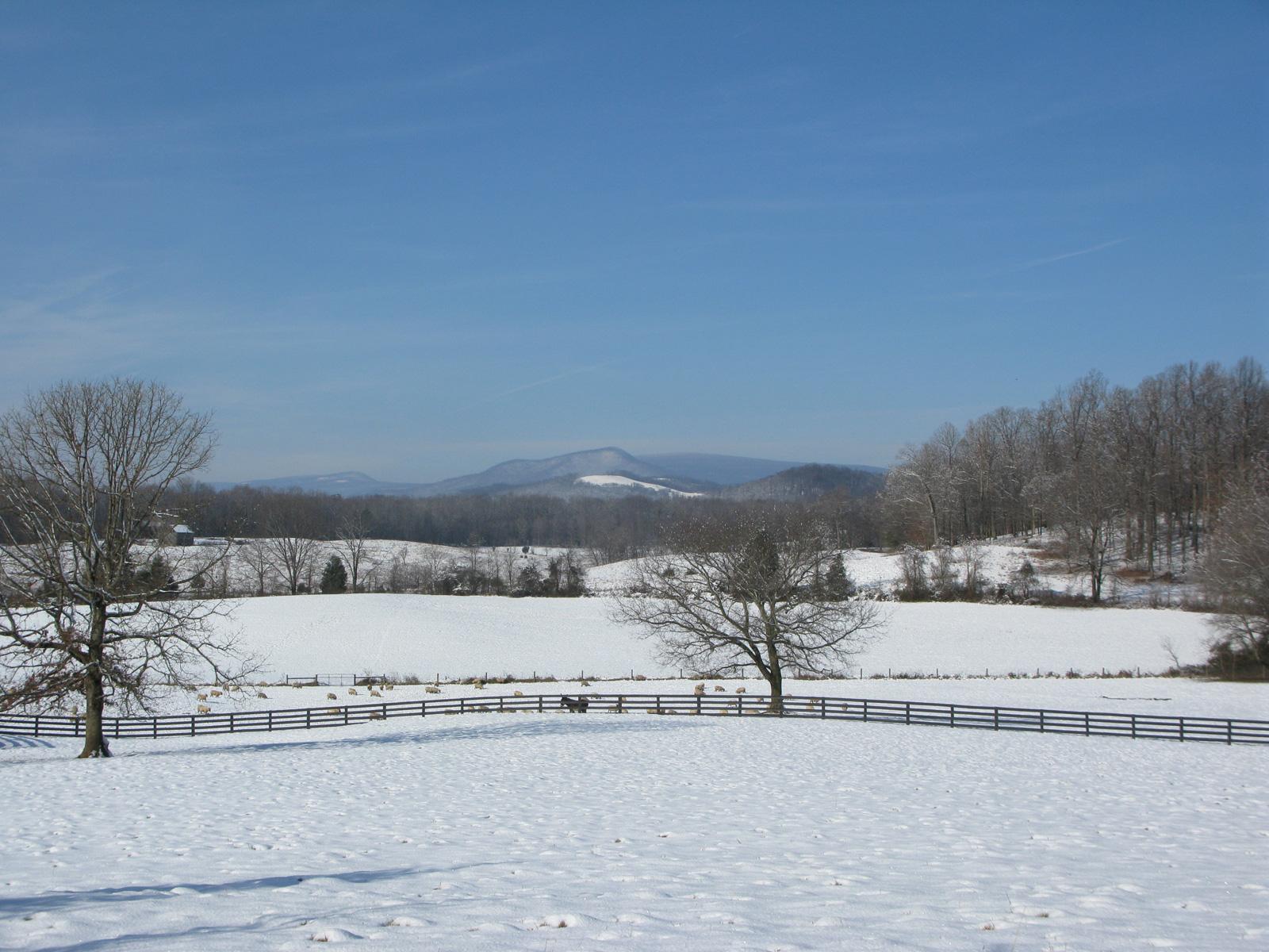 winterslide14