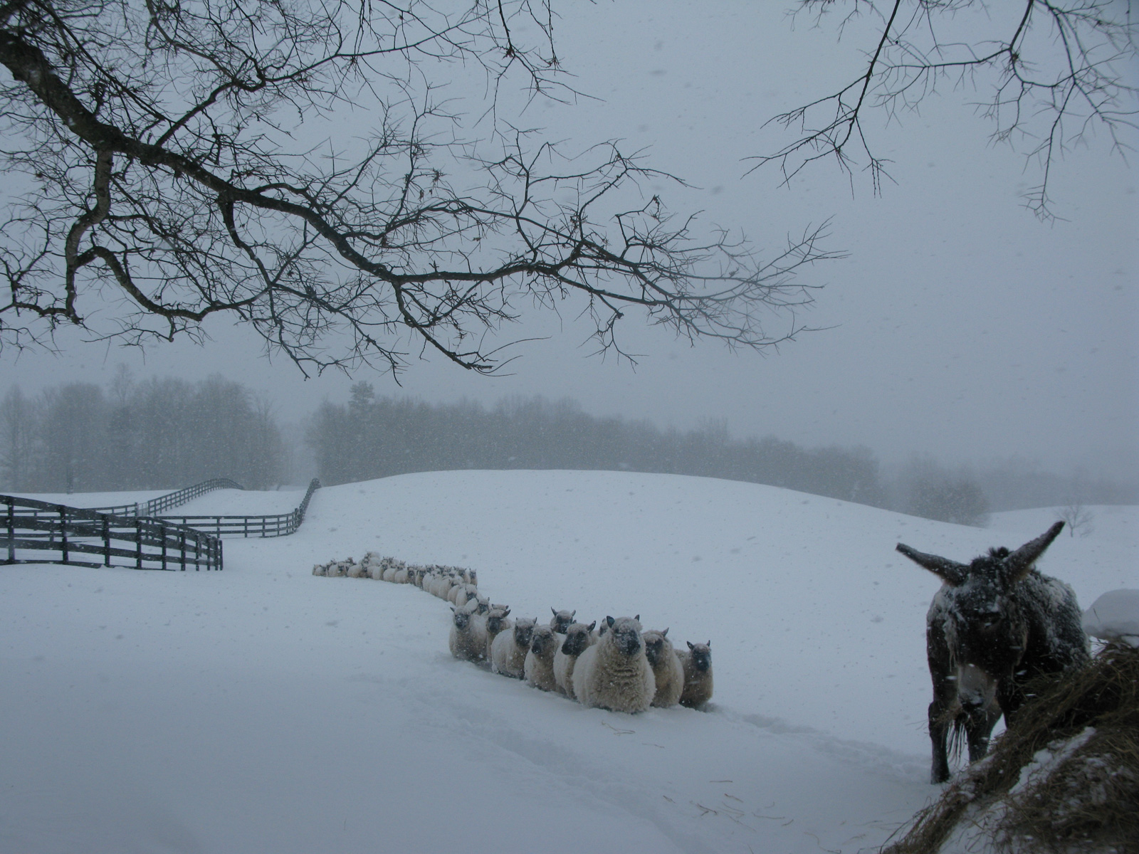 winterslide21