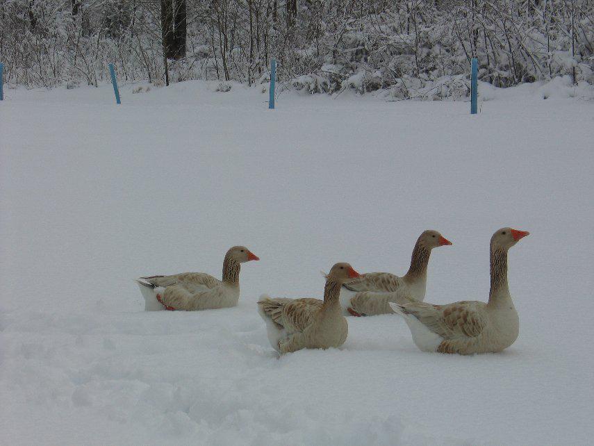 winterslide25
